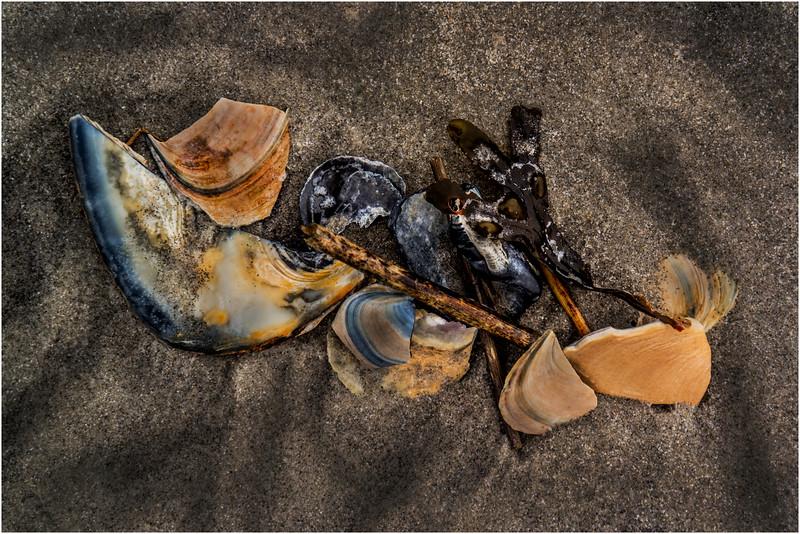 Avalon NJ August 2015 Tideline Shells 24