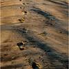 Avalon NJ August 2015 Tideline Footsteps 1