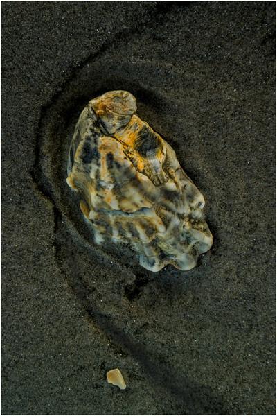 Avalon NJ August 2015 Tideline Shells 88