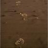 Avalon NJ August 2015 Tideline Footprints 1