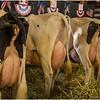 Schaghticoke Fair Cow 11 September 2016