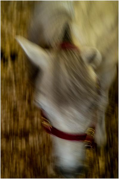 Schaghticoke Fair Horse 1 September 2016