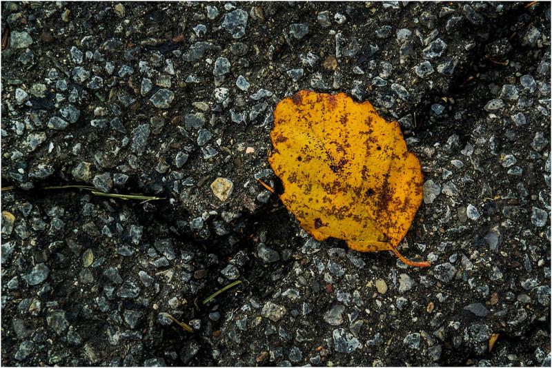 Delmar NY Front Driveway October 2015 Leaf 1
