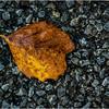 Delmar NY Front Driveway October 2015 Leaf 4
