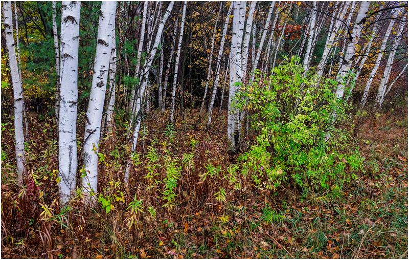 Voorheesville NY Rainy Day 50 October 2017