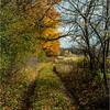 Slingerlands NY November 2015 Treeline 2