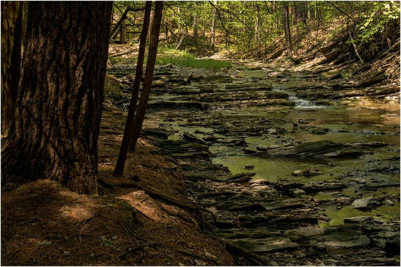 New Scotland NY Five Rivers May 2015 Stream 4