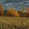 Slingerlands NY November 2015 Treeline 1