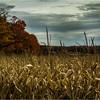 Slingerlands NY November 2015 Treeline 4