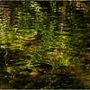 Rensselearville  NY June 2015 Reflections in Lake Creek