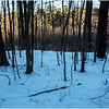 Thatcher Park NY Woods 1 January 2017