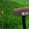 Clarksville NY May 2008 1493