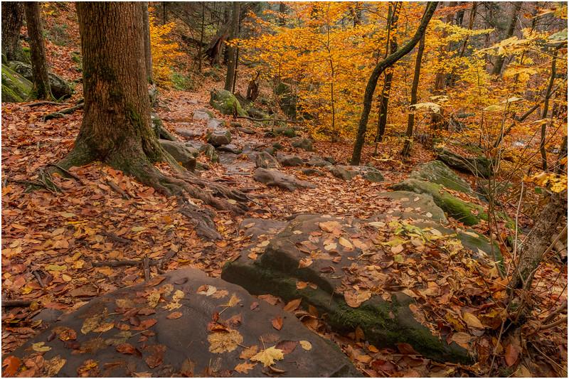 New York Catskills Kaaterskill Clove 7 October 2019