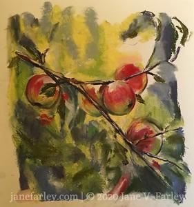 Study of  Apples