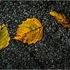 Delmar NY Front Driveway October 2015 Leaf 2