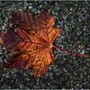 Delmar NY Front Driveway October 2015 Leaf 14