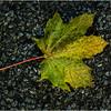 Delmar NY Front Driveway October 2015 Leaf 16