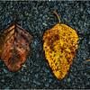 Delmar NY Front Driveway October 2015 Leaf 10