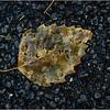 Delmar NY Front Driveway October 2015 Leaf 5