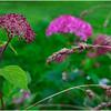 Adirondacks Chateaugay Lake Snug Harbor Trainer Camp Garden Flower 21 August 2017