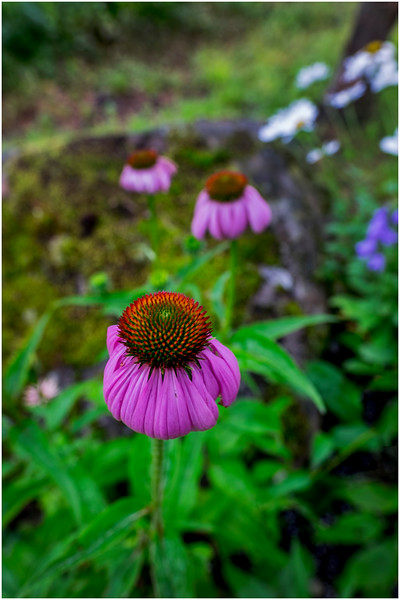 Adirondacks Chateaugay Lake Snug Harbor Trainer Camp Garden Flower 16 August 2017