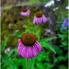 Adirondacks Chateaugay Lake Snug Harbor Trainer Camp Garden Flower 16 August 2017