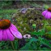 Adirondacks Chateaugay Lake Snug Harbor Trainer Camp Garden Flower 6 August 2017