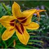 Adirondacks Chateaugay Lake Snug Harbor Trainer Camp Garden Flower 9 August 2017