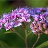 Altamont NY Mom's Backyard Flowers 15 June 2018