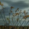 Slingerlands NY November 2015 Treeline 3