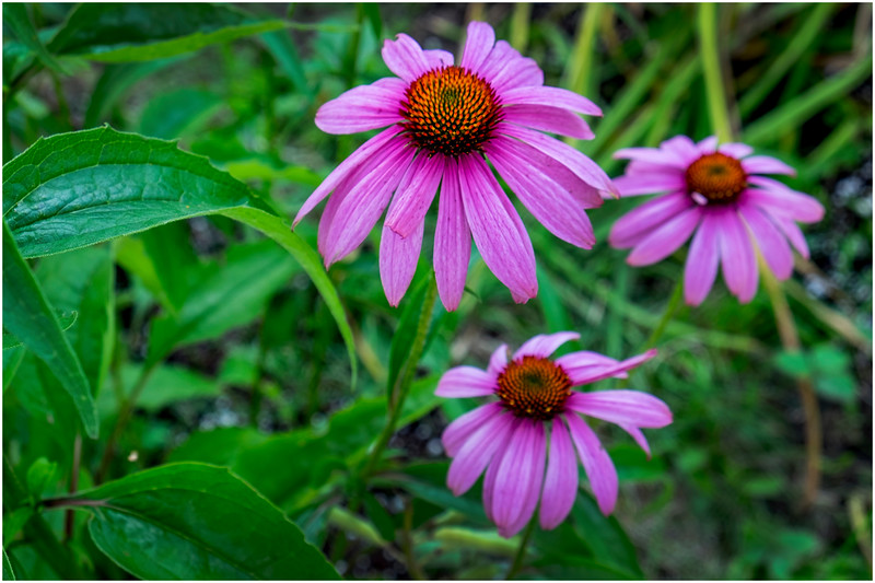 Adirondacks Chateaugay Lake Snug Harbor Trainer Camp Garden Flower 47 August 2017