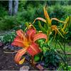 Adirondacks Chateaugay Lake Snug Harbor Trainer Camp Garden Flower 12 August 2017