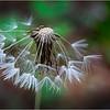 Adirondacks Lake George Flora 36 June 2018