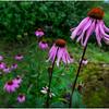 Adirondacks Chateaugay Lake Snug Harbor Trainer Camp Garden Flower 14 August 2017