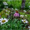 Adirondacks Chateaugay Lake Snug Harbor Trainer Camp Garden Flower 13 August 2017