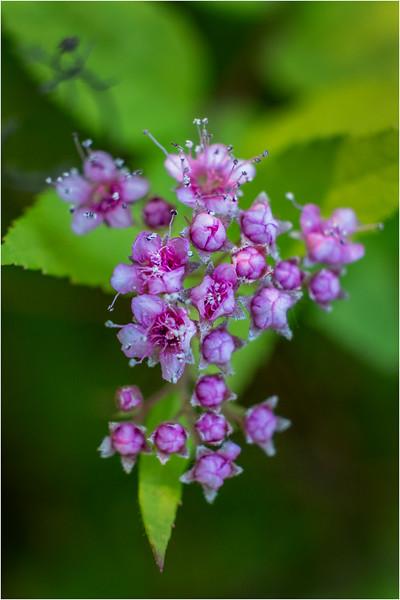 Altamont NY Mom's Backyard Flowers 13 June 2018