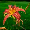 Adirondacks Chateaugay Lake Snug Harbor Trainer Camp Garden Flower 22 August 2017