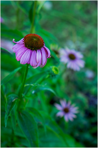 Adirondacks Chateaugay Lake Snug Harbor Trainer Camp Garden Flower 35 August 2017