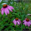 Adirondacks Chateaugay Lake Snug Harbor Trainer Camp Garden Flower 19 August 2017