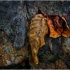 Becket Massachusetts September 2009 Leaf 8