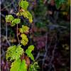 Slingerlands NY Five Rivers 114 October 2017