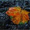 Becket Massachusetts September 2009 Leaf 4