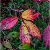 Slingerlands NY Five Rivers 31 October 2017