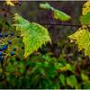 Slingerlands NY Five Rivers 80 October 2017