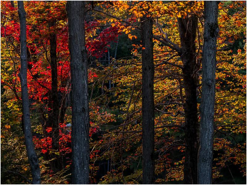 Becket Massachusetts September 2009 Forest 1