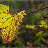 Slingerlands NY Five Rivers 84 October 2017