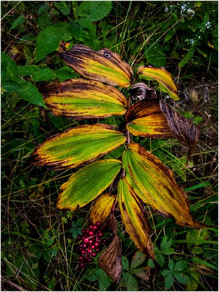 Becket Massachusetts September 2009 Set of Leaves 1