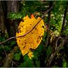 Becket Massachusetts September 2009 Leaf 6