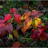 Slingerlands NY Five Rivers 132 October 2017