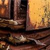 Adirondacks Essex Chain Parking Lot Old Truck Detail 3 October 2013